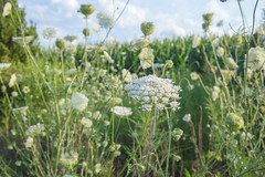 Wild flowers (Andrezza Haddaway) Tags: life flowers green nature thoughts bloom feelings
