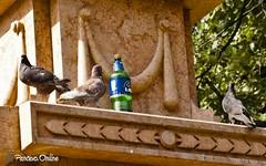 Refreshing (pancevo.online) Tags: pancevo architecture beer vojvodina serbia pigeons