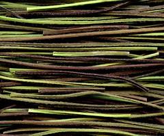 57450.15 Lamium galeobdolon (horticultural art) Tags: horticulturalart lamiumgaleobdolon lamium deadnettle stems lines pattern