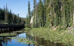 Yellow Pond Lilies in Isa Lake (Morten Kirk) Tags: mortenkirk morten kirk yellowstone national park ynp usa 2016 sony a7rii a7r ii sonya7rii ilce7rm2 zeiss sonnar t fe 55mm f18 za sonnartfe55mmf18za sel55f18z isa lake yellow pond lilies