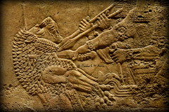 Detail of a scene of Ashurbanipal II's Lion-Hunting (Sumer and Akkad!) Tags: ashurbanipal mesopotamia nineveh iraq lion lionhunting britishmuseum london neoassyrianperiod