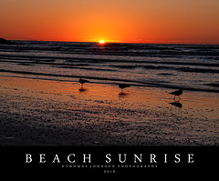 Beach Sunrise (Thomas  Johnson Photography) Tags: texas galveston outside outdoors canon digital 40d scenic ocean water sun sunrise birds sand orange yellow thomasjohnsonphotography thomasjohnsonphotography 2016 early morning galvestontexas
