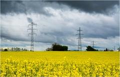 Orage (Dabelle) Tags: orage colza collines champ crales sundgau