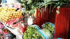 Gato esperto (luyunes) Tags: gato bicho luciayunes motomaxx