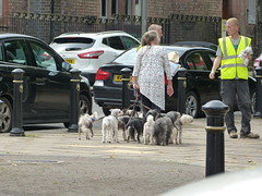 Dog Walking (Thomas Kelly 48) Tags: panasonic lumix fz150 woolton liverpool dogs dogwalker