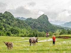 Rice fields in the Shan Mountains (mathias.moeller) Tags: aisa myanmar shanstate shanmountains ricefields trekking southeastasia backpacking