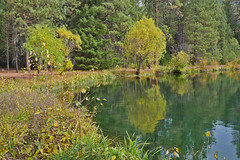 mh1290257reflection (thom52) Tags: metoliusriver wizard falls fish hatchery bend or oregon