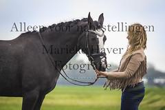 15 oktober 2016-86 (MZorro4) Tags: mariekehaverfotografie oudesluis schagen paardenfotografie portretfotos rijden wwwmariekehaverfotografienlpaarden