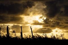 Silhouette Sunset Cloudy Sky Wood Wooden Poles Beauty In Nature Cloudscape Sky Cloud Calm Sea Non-urban Scene September 2016 September Japan Photography Atomosphere Travel Hokkaido,Japan Hokkaido (T.M Photos) Tags: silhouette sunset cloudysky wood woodenpoles beautyinnature cloudscape sky cloud calmsea nonurbanscene september2016 september japanphotography atomosphere travel hokkaido japan hokkaido
