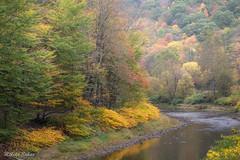 Pine Creek Trail (melike erkan) Tags: creek pinecreek water leaves trees autumn fall golden red orange pa pennsylvania tiogacounty roadtrip wellsboro