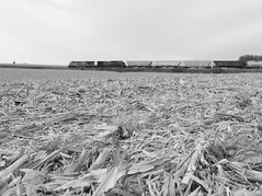 Smooth sailing (MN transfer) Tags: canadianpacific railway cp cprail dme wasecasub lewiston minnesota freight train 471 westbound field corn harvest autumn october october16th2016