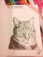 Day 14 of my sketch streak (# annola) Tags: disegno dessin zeichnen cat gatto chat