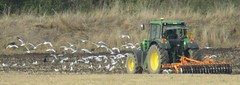 Farming The Seagulls (Gary Chatterton 3 million Views Thank You All) Tags: johndeere tractor plow agriculture farming seagull field burn northyorkshire