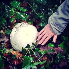 Giant puffball (Daniel James Greenwood) Tags: mobilephone mobilephonephotos instagram instagramphotography nokialumia