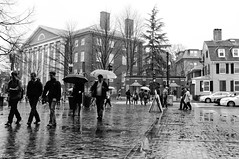 Harvard University (BimalNepal) Tags: street cambridge blackandwhite bw men art water boston rainyday mit massachusetts harvard streetphotography streetlife harvardsquare americans harvarduniversity umbrellas bostonma bostonians streetfashion americanlife documentaryphotography bostonphotographer bostonblackandwhite bwboston bimalnepal
