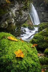 Chute d'automne (El Boludo !) Tags: longexposure autumn leaves automne vercors sassenage poselongue furon