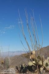 Sonoran Desert (John Conaway _ Art & Design) Tags: art nature digital photography graphics image creative prints products gfx johnconaway conaway