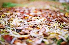 November (mertcaninal) Tags: november slr leaves weather analog pentax fujifilm pentaxmesuper analogphotography