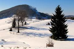 árnyak és nyomok / Shadows and Traces (debreczeniemoke) Tags: winter shadow snow tree traces fa gutin hó tél árnyék nyomok poianaboului canonpowershotsx20is gutinhegység munţiigutâi ökörmező munţiigutin gutinmountains