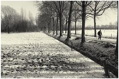 December: let it snow (H. Bos) Tags: winter blackandwhite snow nature weather season landscape december zwartwit sneeuw natuur oisterwijk brabant sneeuwpret landschap noordbrabant weer snowfun kampina 2014 boxtel seizoen