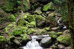 L'eau peut donner naissance  la nature (- Ali Rankouhi) Tags: green water iran north february  gilan     2015 bahman  1393  qalehrudkhan