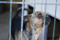 S.P.A.M.A Safor (Meencantaquehagafrio) Tags: stray perros animales paws gandia protectora spama