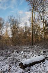 20150204-R0012454 (Hjk) Tags: schnee winter wintertime sonnenaufgang morgen ricohgr hennef rheinsiegkreis