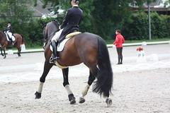 IMG_1344 (dreiwn) Tags: horse pony aachen pferd equestrian horseback horseriding chio dressage hnger reitturnier dressur 2013 pferdekopf dressuur pferdesport pferdehnger turnierreiten chioaachen