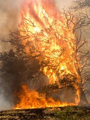 AZ_11-06-08_0252 (Wildland Fires 2012) Tags: arizona flames 2011 wallowfire