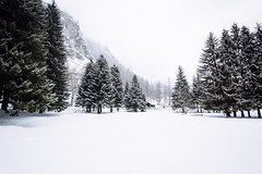 Frozen lake (ikhals) Tags: trees italy snow nature landscape pines canonef1740mmf4lusm comeandsee canon6d vsco teamcanon vscofilm