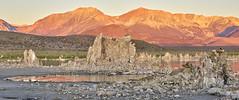 Sunrise At Mono Lake (Duncan Rawlinson - Duncan.co - @thelastminute) Tags: california pink usa lake mountains green bird water sunrise landscape rocks crow monolake southtufa salinesodalake highlevelsofsalts