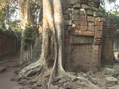 Trees Growing Through the Temple