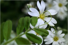 PETALES ET COULEURS (Gilles Poyet photographies) Tags: fleurs soe auvergne autofocus cration royat aplusphoto parcbargoin artofimages rememberthatmomentlevel1