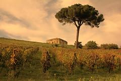 Wine of the castles ((Elio Ausili)) Tags: travel italy landscape nikon adventure campagna paesaggi 2015 nikond7100
