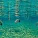 Underwater swimmers III, 2011 - 2012