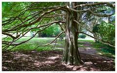 Quiet afternoon - early Autumn (keikoellis) Tags: tree garden australia nsw southcoast autaumn borderfx