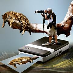 Photo instantaneous (jaci XIII) Tags: animal leopardo photo foto printer leopard trunk fotografia tronco copier instantaneous impressora copiadora instntanea