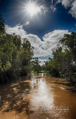Flood Warning1387 (Manni750) Tags: rivers rising warren flood water muddy sky trees clouds bush