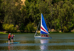 Fun on Vasona Lake (randyherring) Tags: ca nature water outdoor lake recreation sailboat california americancoot santaclaracountyparks trees losgatos afternoon sky park boats sailing boat vasonalakecountypark unitedstates us