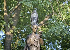 Fledgling on the Temperance fountain (Goggla) Tags: nyc new york manhattan east village tompkins square park urban wildlife bird raptor red tail hawk fledgling juvenile temperance fountain statue goglog