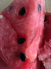 2016 July 24, Watermelon iphone 6s2016 July 24, Watermelon iphone 6s (King Kong 911) Tags: watermelonsweet juicy red seeds