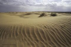 A rainy day in the desert, Tunisia (Svetlana Polukhina) Tags: tunisia tunisie    desert sand dune   landscape analog 35mm film outdoor fuji velvia e6