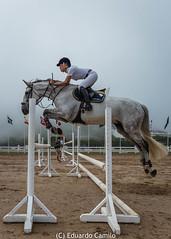 Vimeiro International Horse Contest (Eduardo Camilo PT) Tags: horses verde sports action