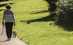 Dog walker & rabbits (Anthony J Woods) Tags: lady dogwalker dog rabbits rabbit youngrabbits sunshine grass rural countryside