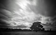 Pulborough (hall1705) Tags: daytimelongexposure pulborough tree clouds sky field movement mono blackwhite westsussex d3200 nd nature nikon