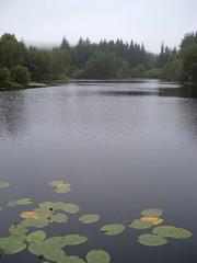 lochan (ztephen) Tags: scotland kirrochtree lochan lily pads