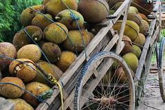 Jackfruit haul (I.M.W.) Tags: bangladesh srimangol sylhet jackfruit fruit barrow cart