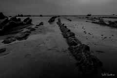 Cola de dragn BW (dabidnet) Tags: bizkaia playa mar naturaleza verde verano euskalherria barrika nubes paisaje
