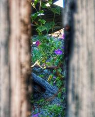The secret garden (lulythewitch17) Tags: green verde secret viola garden giardino fiori hdr