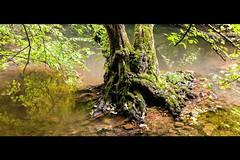 Island in the stream - Leigh Brook (Macro light) Tags: worcestershire wildlife trust theknapp leighbrook trees islands